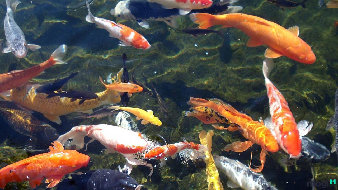 Chọn hướng đặt bể cá cho người mệnh Mộc cực hay