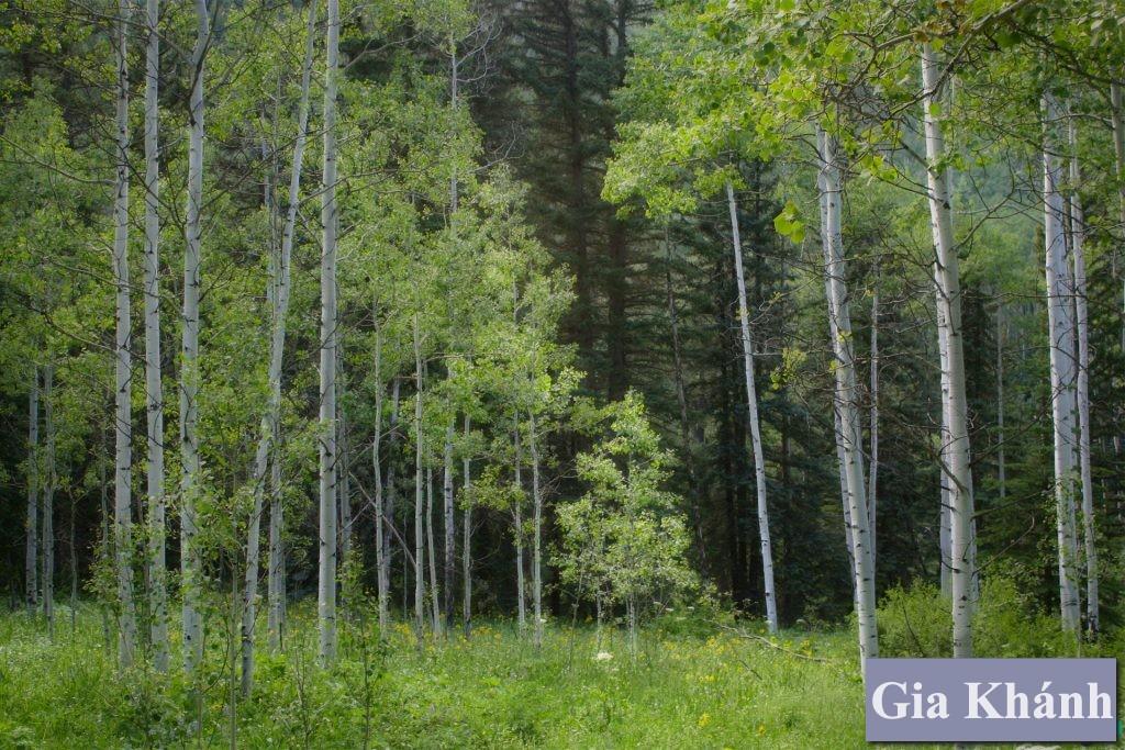 Chuyển đổi đất trồng cây lâu năm thành thổ cư cần biết yếu tố pháp lý nào?