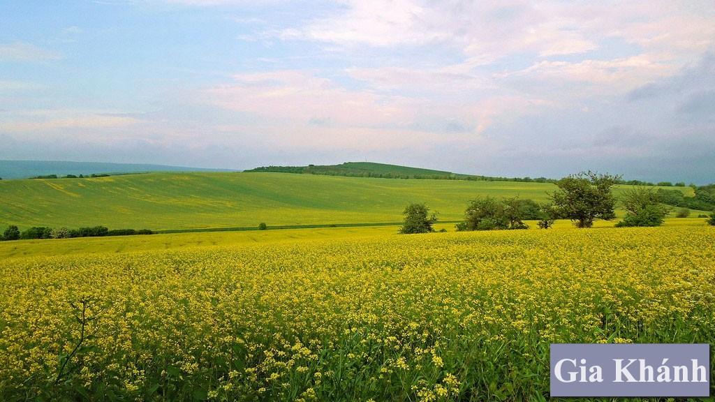 Thủ tục mua bán đất nông nghiệp: Dễ hay khó?